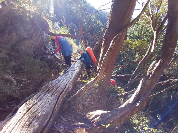 Hikers crossing fallen trees on the trail
